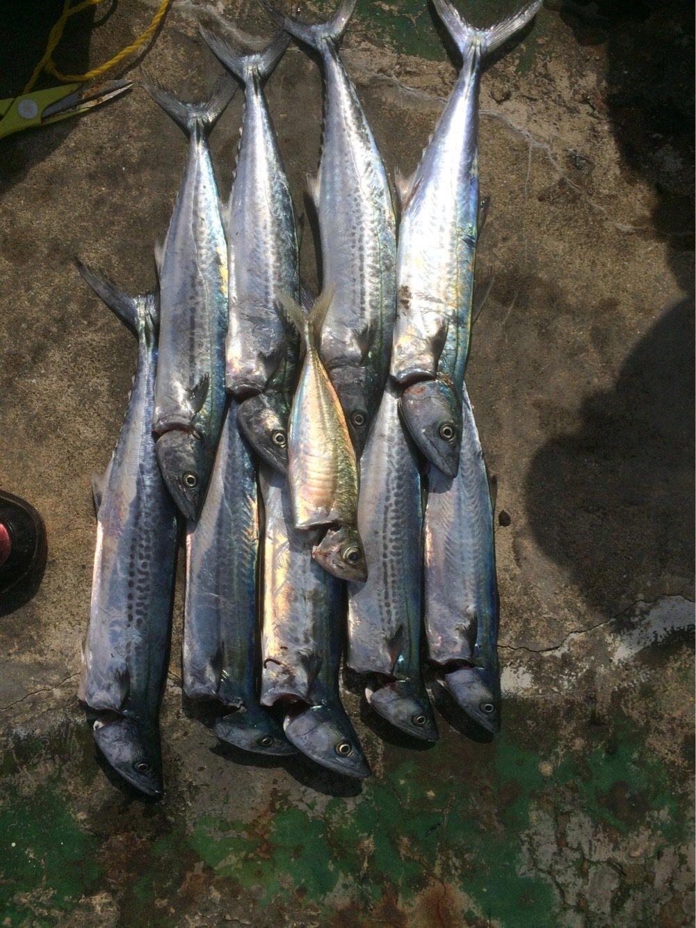 Tbsmanさんの投稿画像,写っている魚は