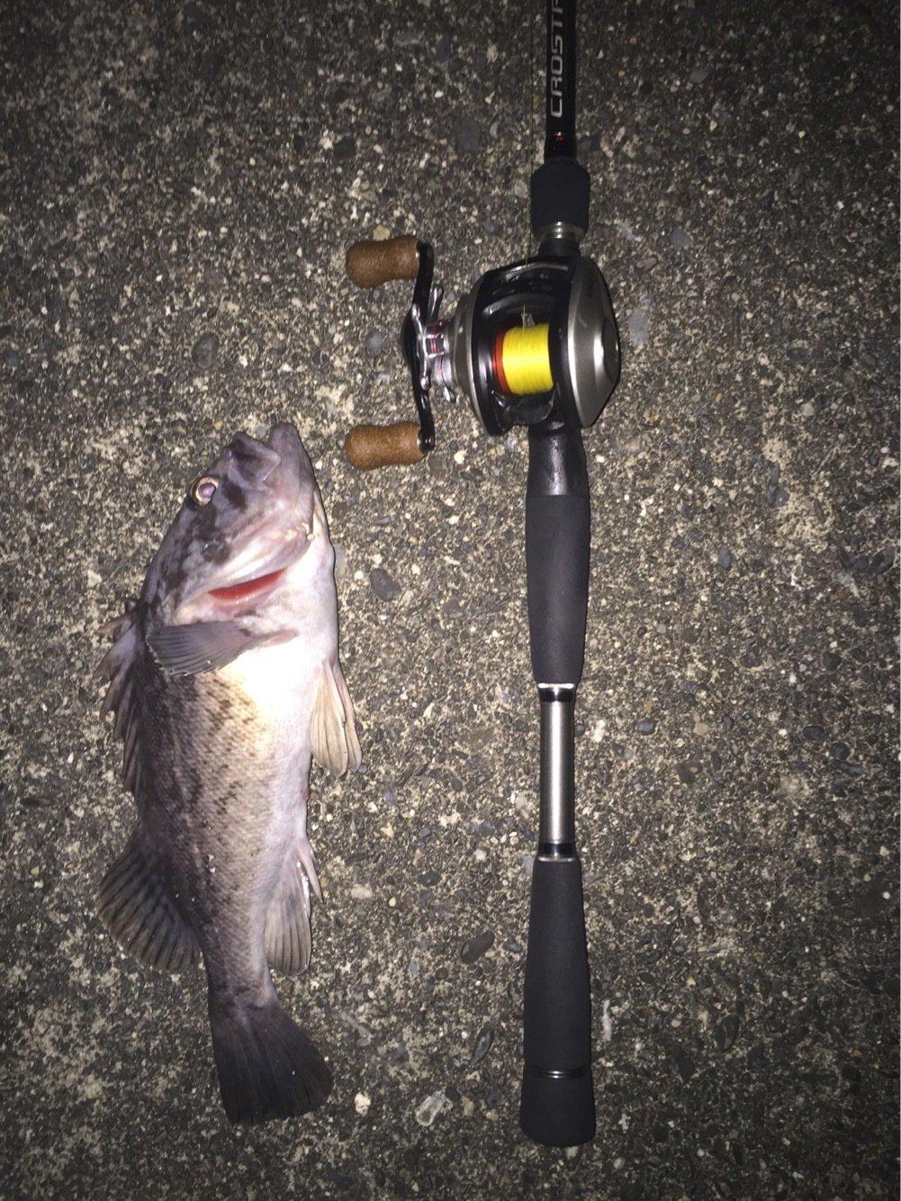SHOKIさんの投稿画像,写っている魚はクロソイ