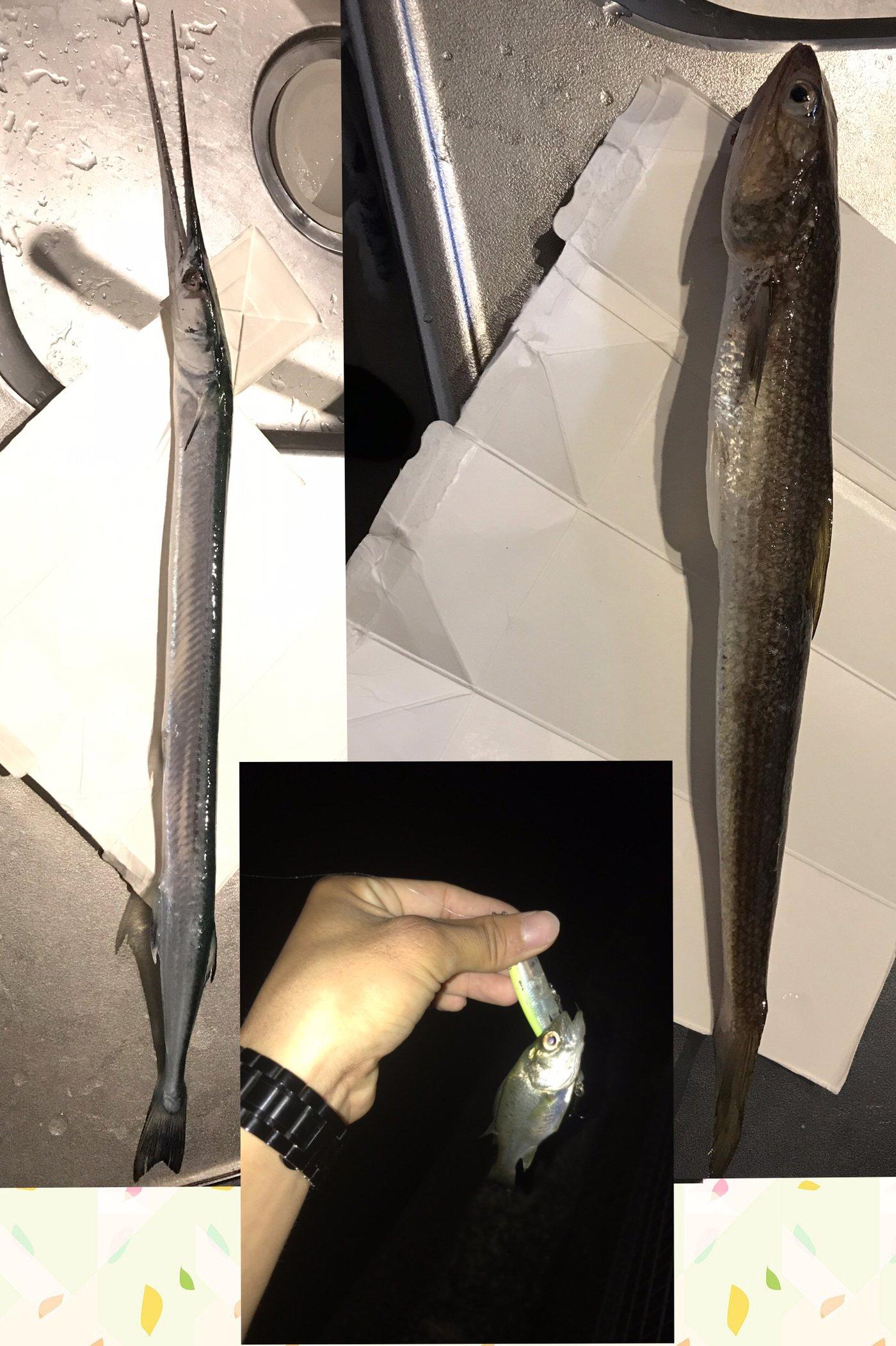 テラざわすさんの投稿画像,写っている魚はダツ,エソ,スズキ