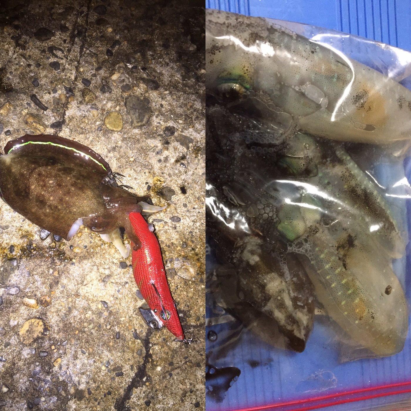 かずさんの投稿画像,写っている魚はアオリイカ,コウイカ