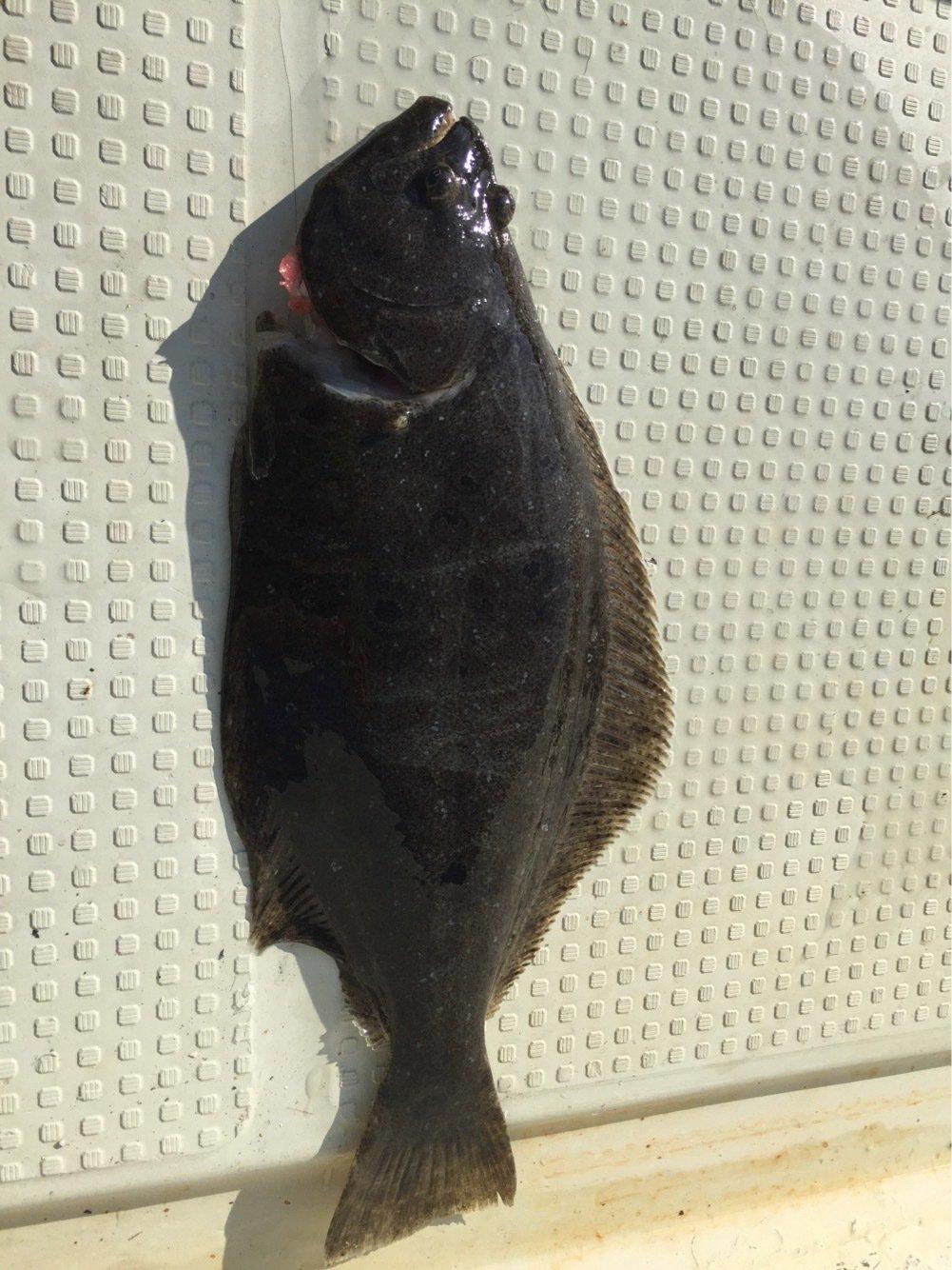 Atsushiさんの投稿画像,写っている魚はヒラメ
