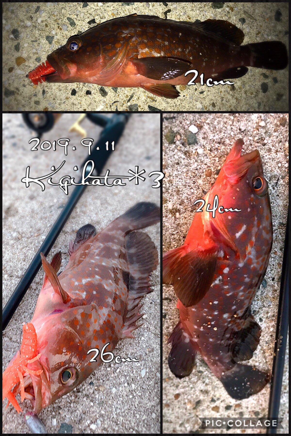 kaito@さんの投稿画像,写っている魚はキジハタ