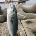 atoさんの青森県三沢市での釣果写真