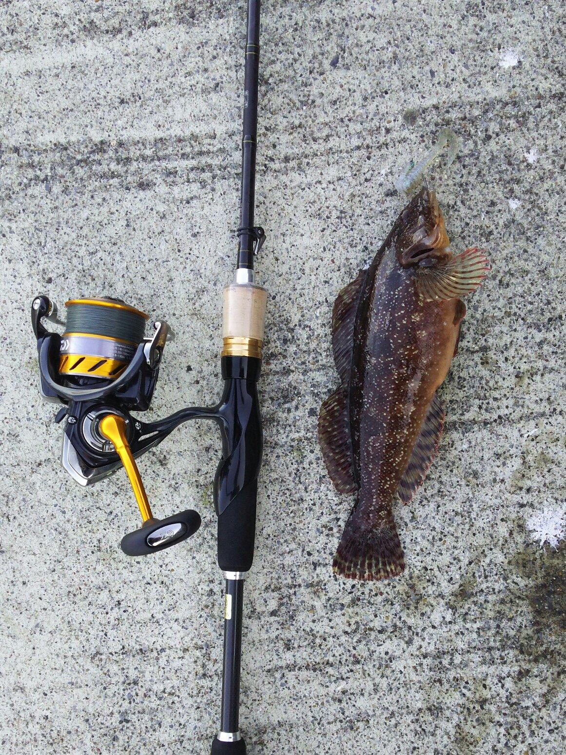 キャンディーさんの投稿画像,写っている魚はアイナメ