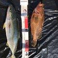アオビカリさんの兵庫県洲本市での釣果写真