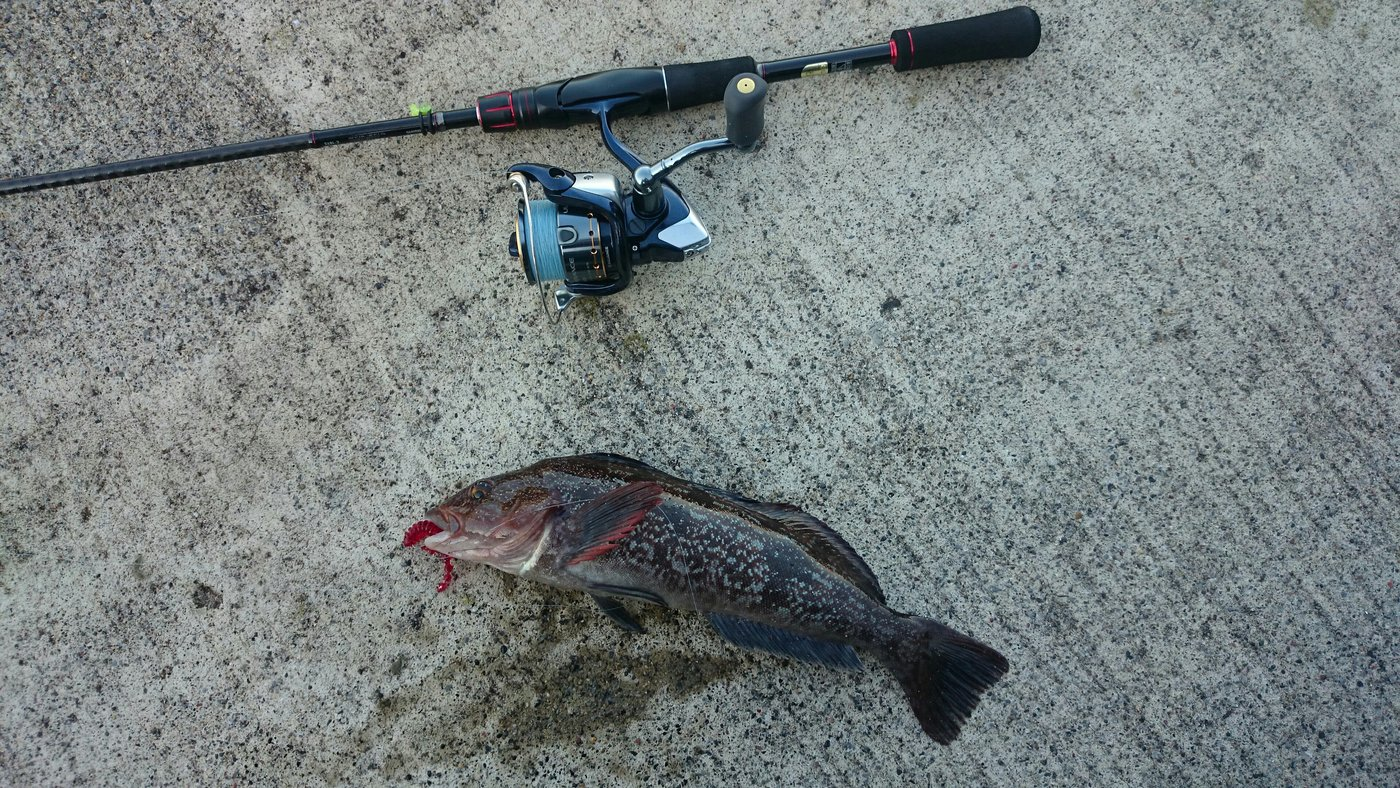 9時ッコさんの投稿画像,写っている魚はアイナメ