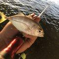 マサマサ🐡さんの沖縄県宜野湾市での釣果写真