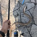mztkさんの静岡県湖西市での釣果写真