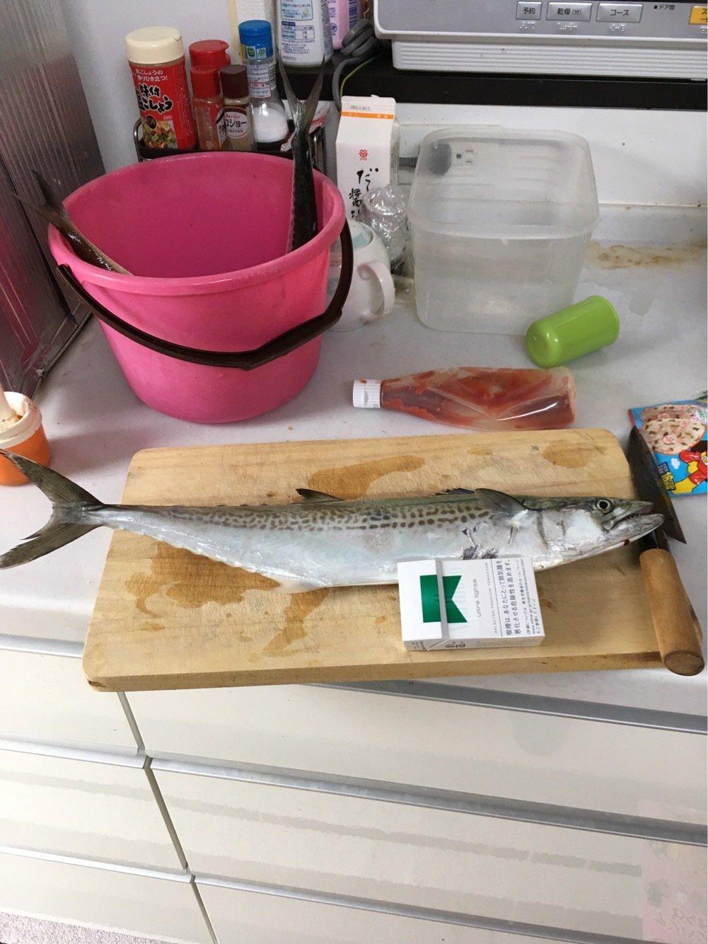 池上 代司治さんの投稿画像,写っている魚はサワラ