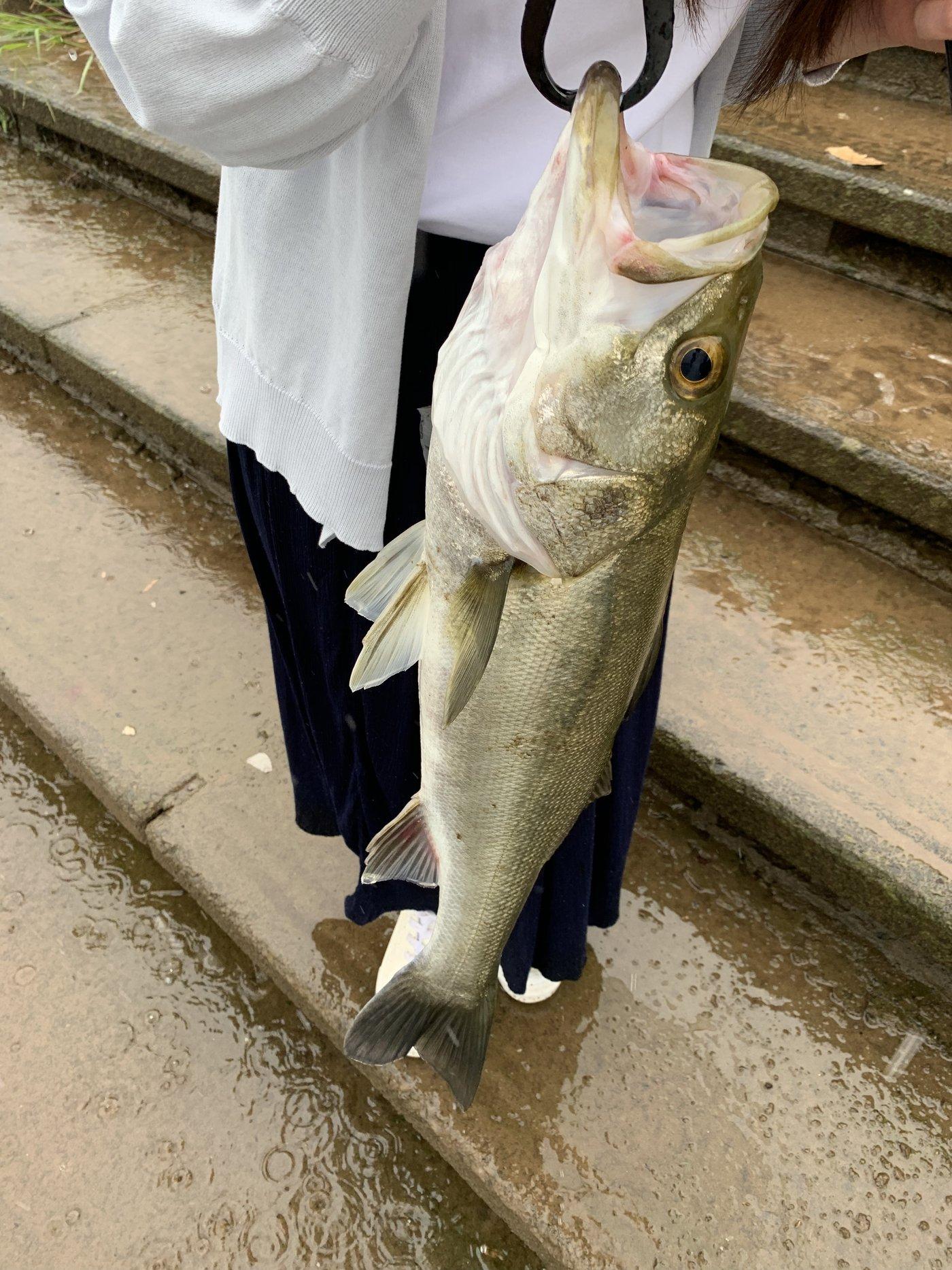月夜さんの投稿画像,写っている魚はスズキ