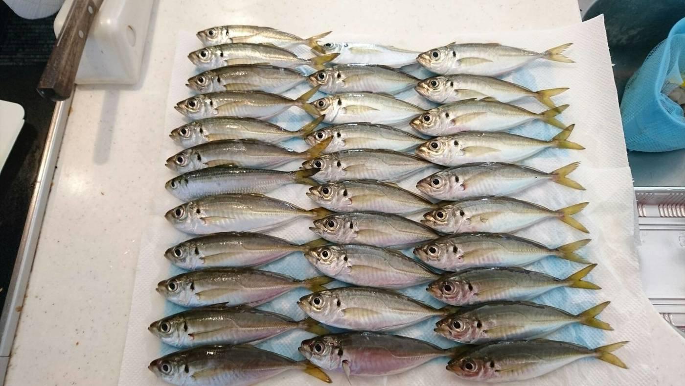 tomoyaさんの投稿画像,写っている魚はアジ
