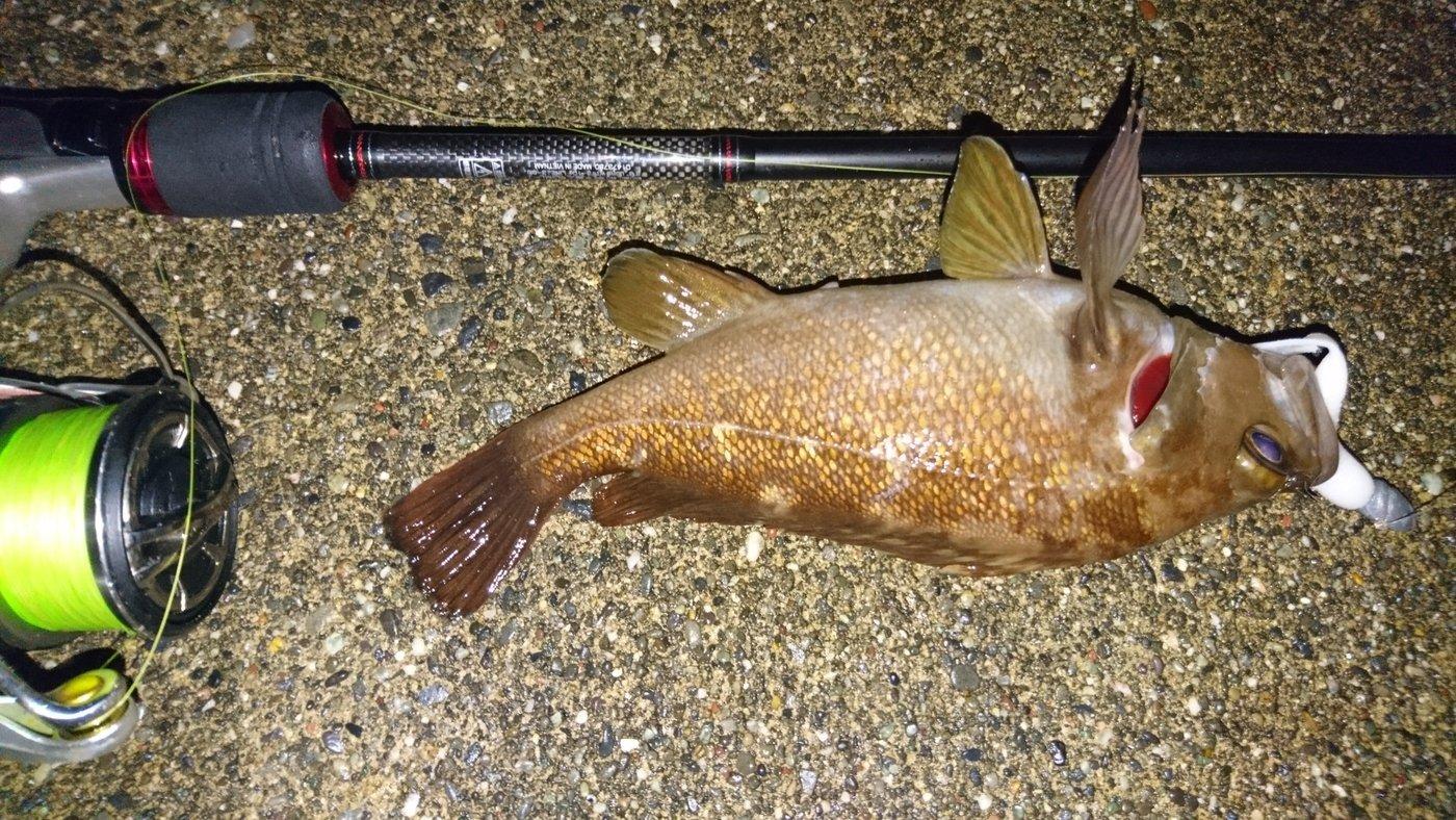 カチュアさんの投稿画像,写っている魚はエゾメバル