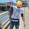 しょーゃさんの和歌山県でのクロダイの釣果写真