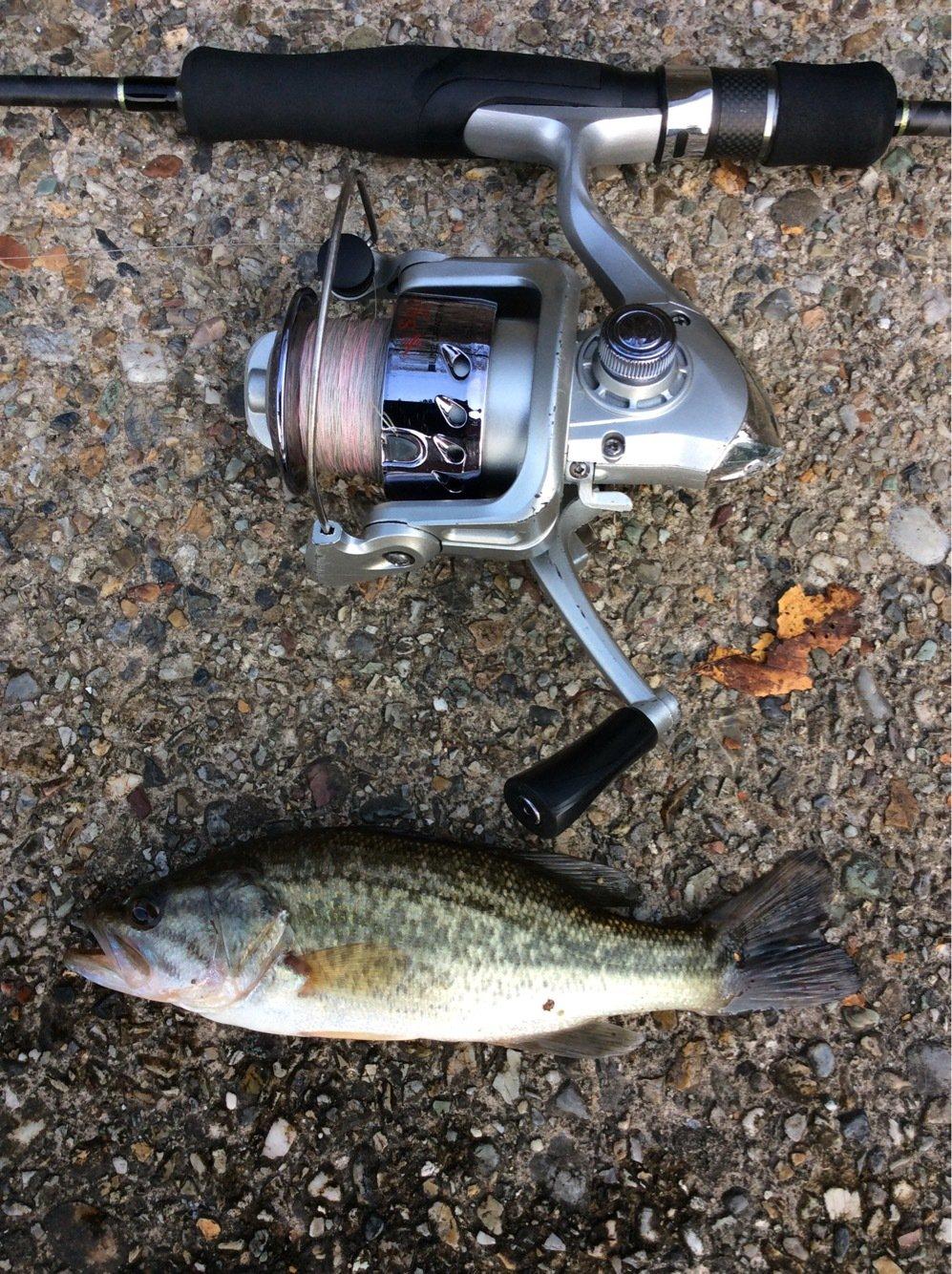 アイナメさんの投稿画像,写っている魚はブラックバス