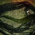 しんパパさんの青森県でのナマズの釣果写真