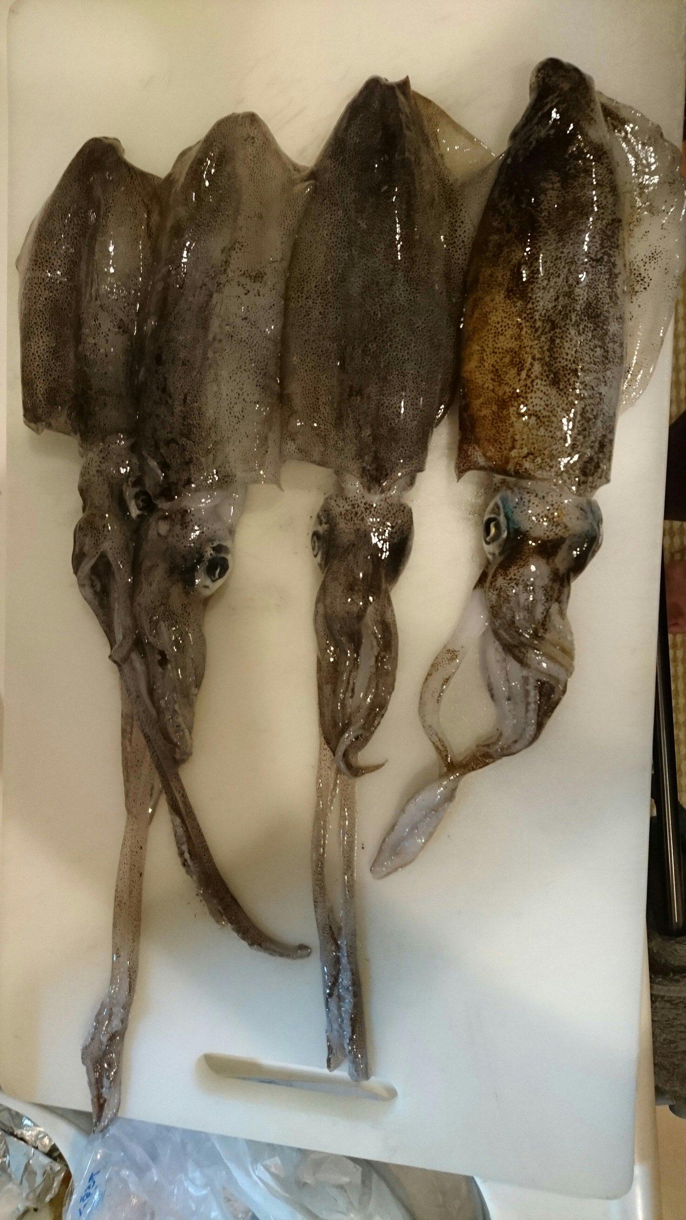 伊予灘物語Ⅱさんの投稿画像,写っている魚はアオリイカ
