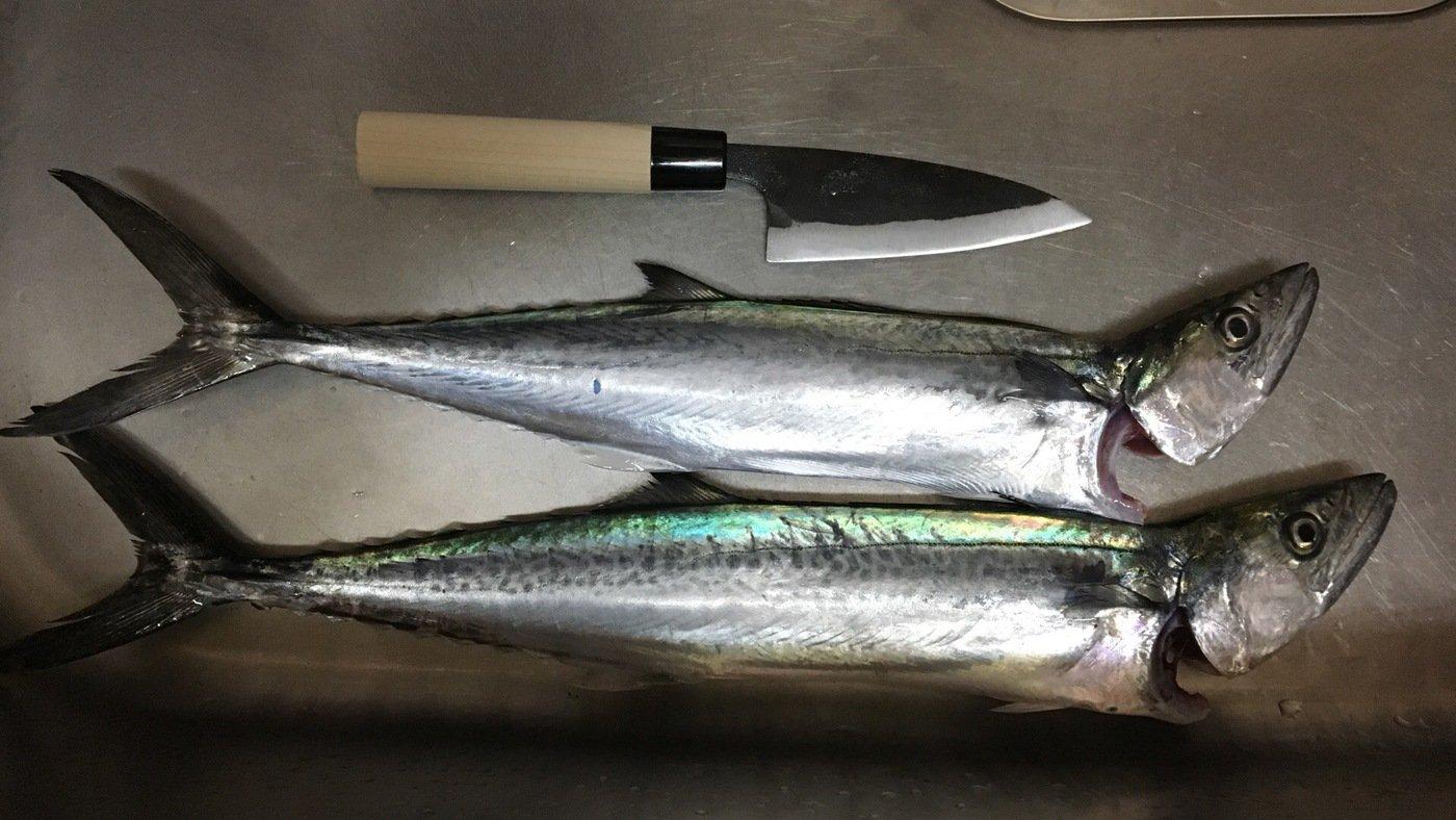 健斗さんの投稿画像,写っている魚はサワラ