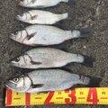 cspさんの茨城県での釣果写真