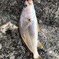 roppyさんの静岡県榛原郡での釣果写真