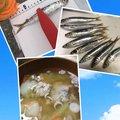 yumiさんの神奈川県平塚市での釣果写真