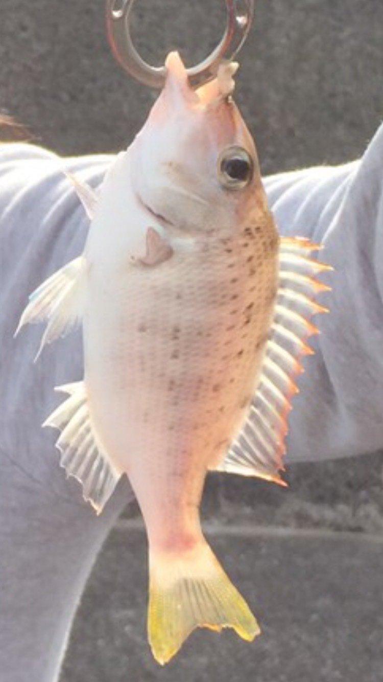 レイコさんの投稿画像,写っている魚は