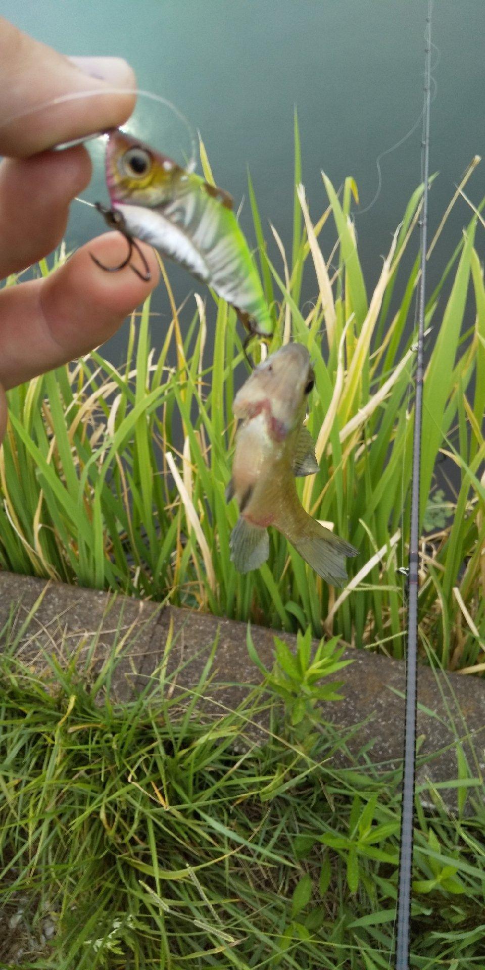 釣れない人さんの投稿画像,写っている魚は