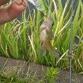 釣れない人さんの茨城県での釣果写真
