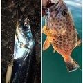 烏賊パンチ☆さんの静岡県でのタチウオの釣果写真