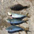 はくさんの青森県三沢市での釣果写真
