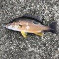 マツケンさんの神奈川県平塚市での釣果写真