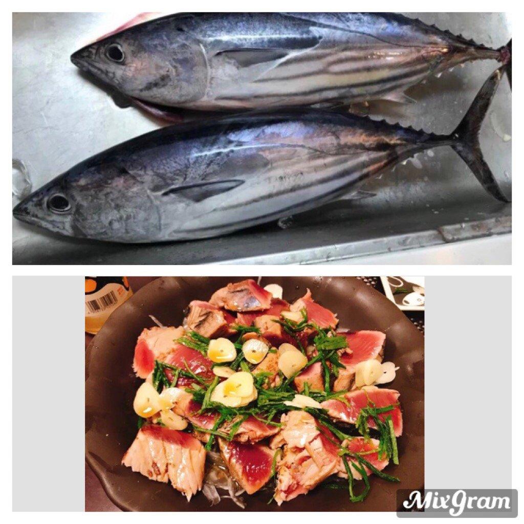 かっしーさんの投稿画像,写っている魚はカツオ,ワラサ
