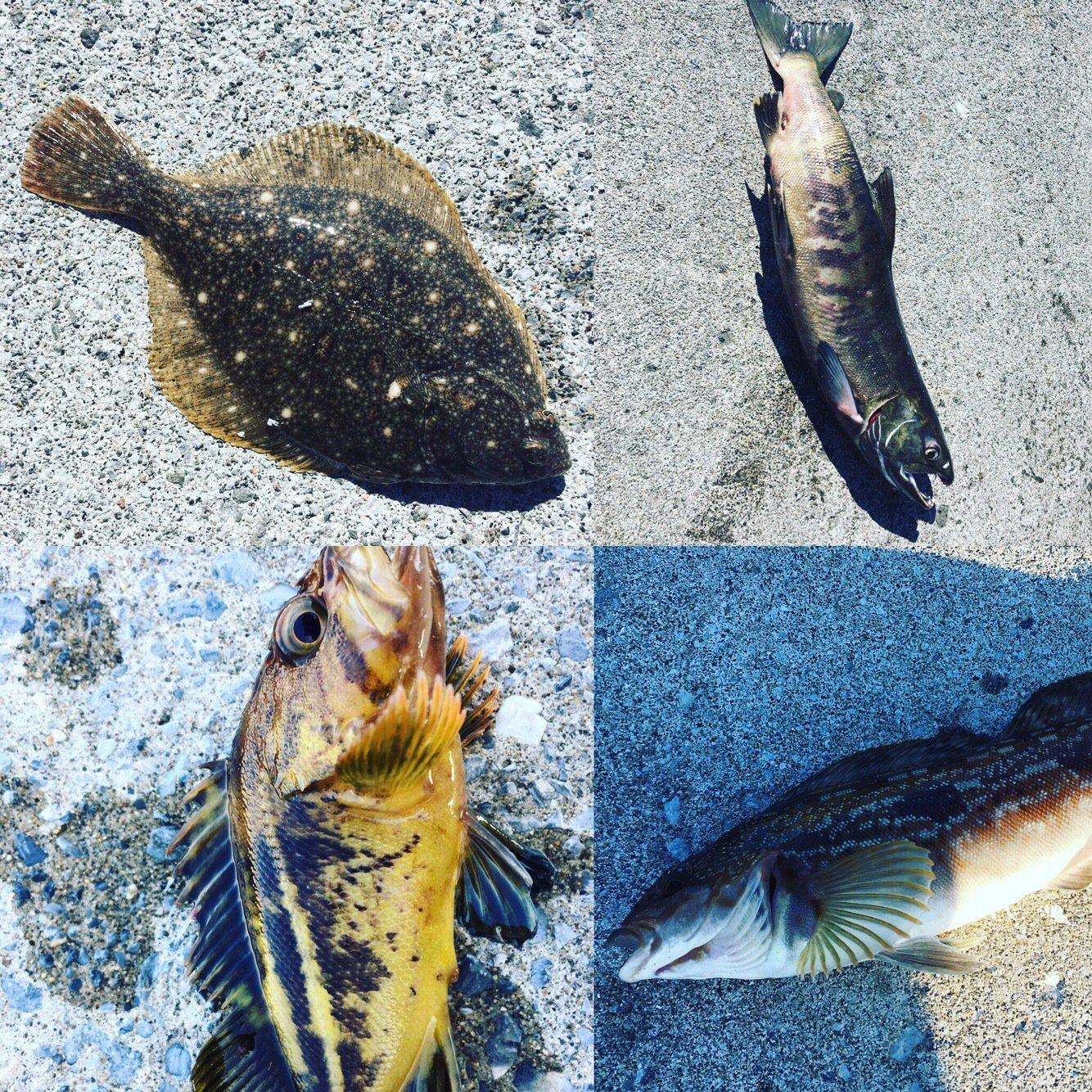 0138STYLEさんの投稿画像,写っている魚はアイナメ