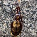 マルスさんの鹿児島県鹿児島市での釣果写真