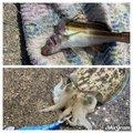 ゆちさんのコウイカの釣果写真
