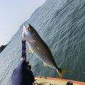 たかやんさんの福岡県福岡市での釣果写真