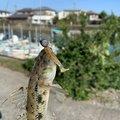 ヤッスンさんの徳島県での釣果写真