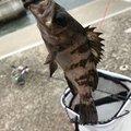 りっくさんの岩手県久慈市での釣果写真