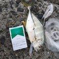 吉岡 大来さんの大分県での釣果写真