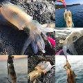 キチさんの新潟県岩船郡での釣果写真