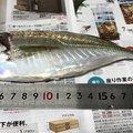 peeさんの和歌山県和歌山市での釣果写真