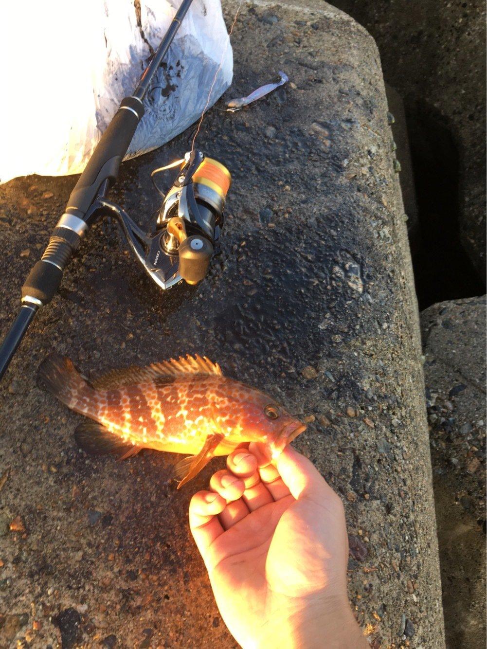 オリさんの投稿画像,写っている魚はキジハタ