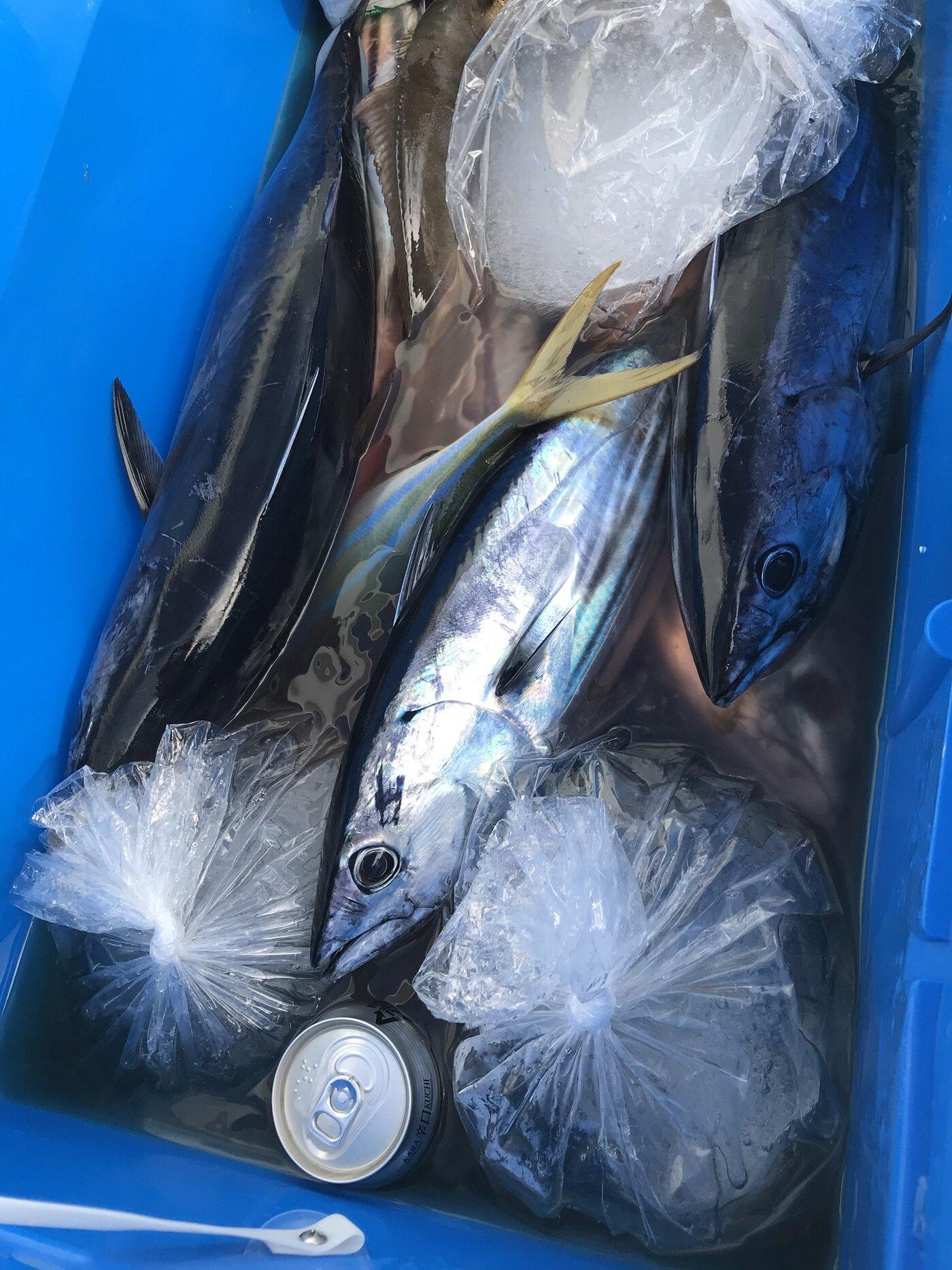 いぬっころさんの投稿画像,写っている魚はカツオ,カンパチ