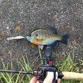 ヒデキさんの滋賀県大津市での釣果写真