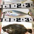 GGさんの青森県三沢市での釣果写真