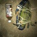 プニーペターリさんの沖縄県名護市での釣果写真