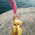 ゆうさんの山口県防府市でのアオリイカの釣果写真