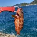まささんの静岡県賀茂郡での釣果写真