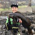 松井 祐樹さんのアイナメの釣果写真