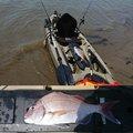 スパルタスさんの大分県での釣果写真