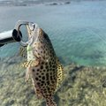 FKZKさんの沖縄県島尻郡での釣果写真